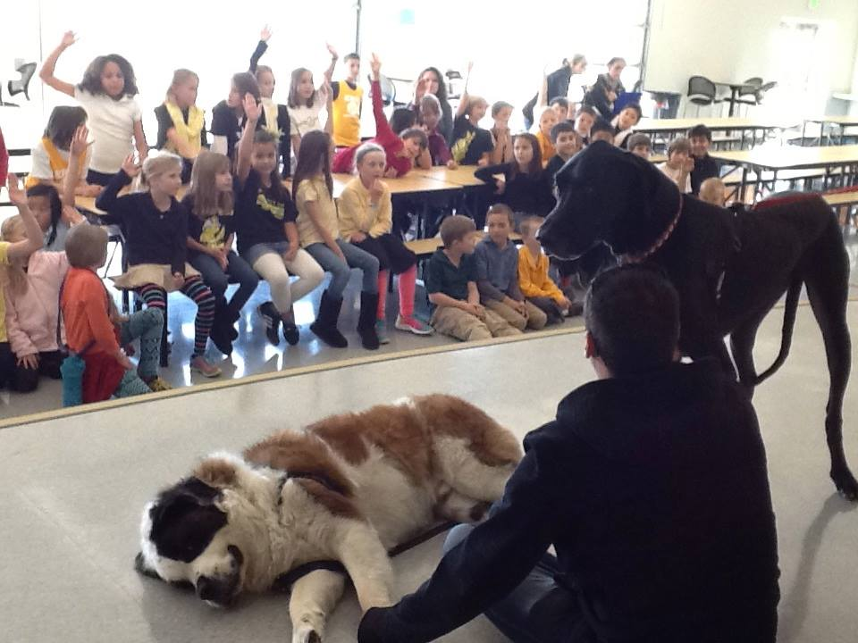 Therapy dogs Harper (St. Bernard) and Happy (great Dane) teach children