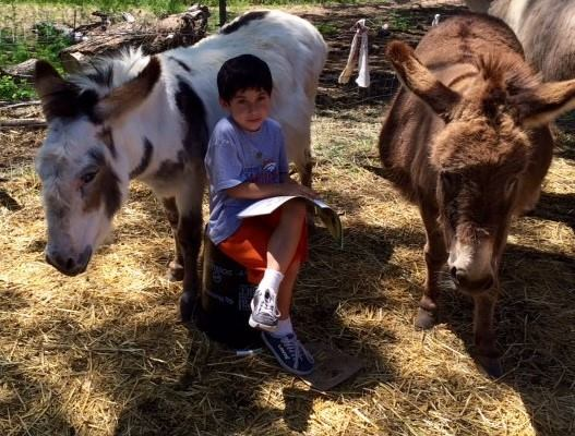 Little boy reading to rescued donkeys Lottie and Gertie