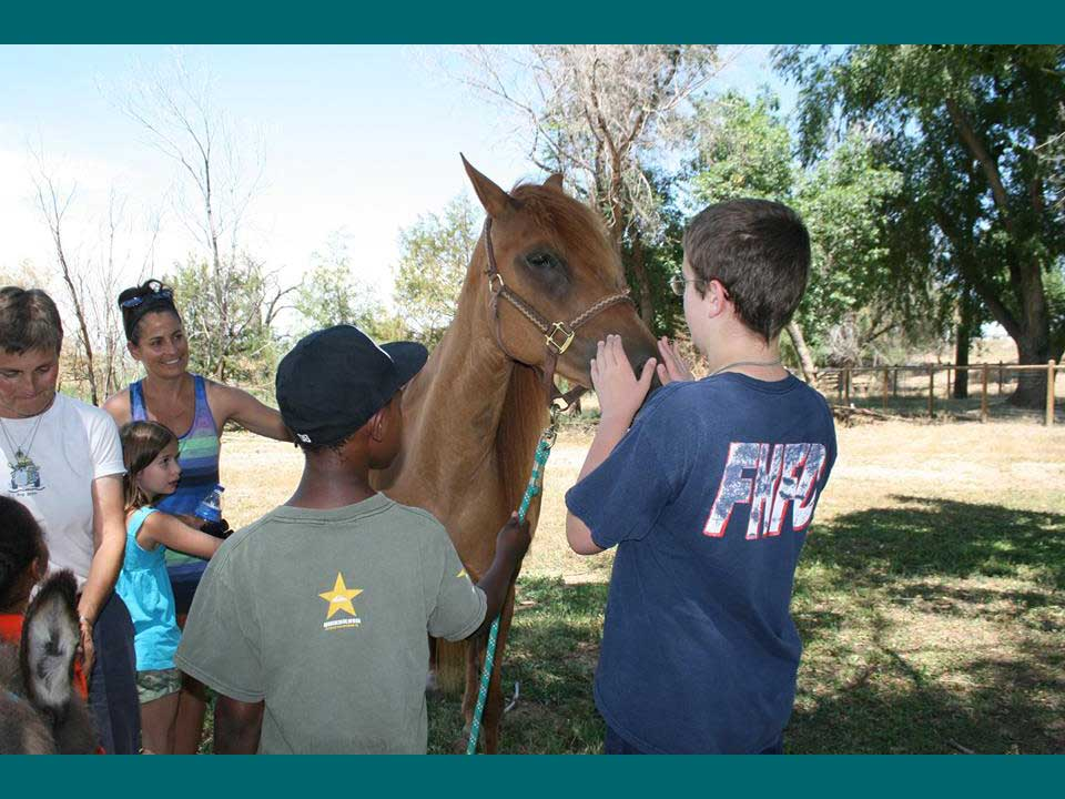 Kids interacting with one of the Project: THRIVE horses