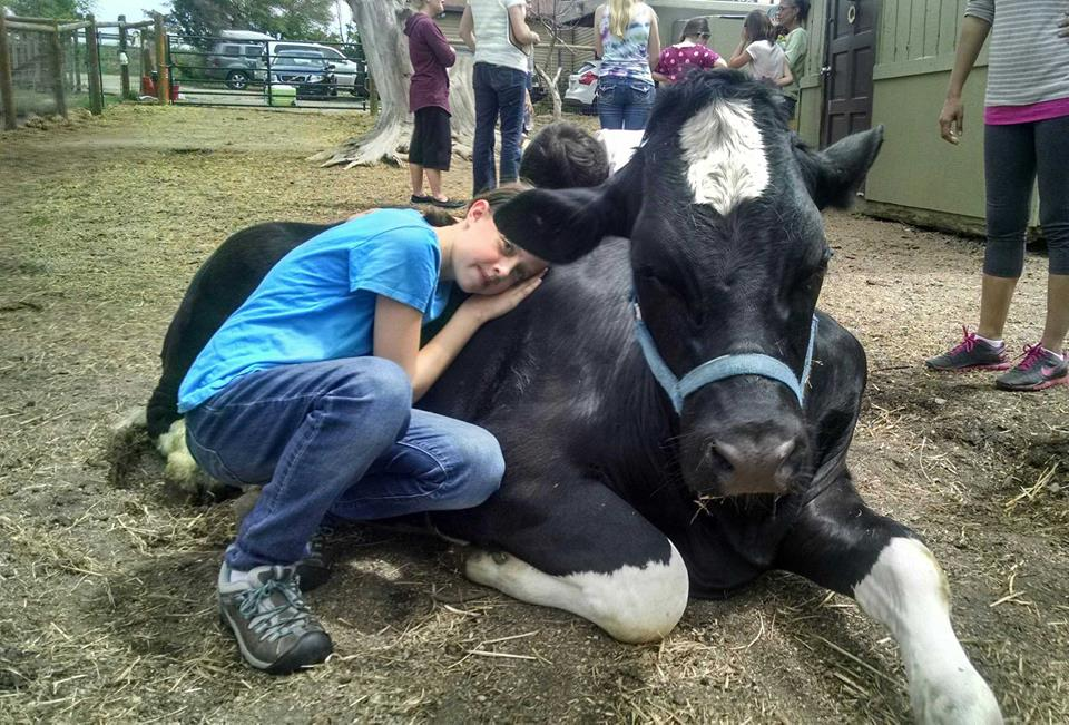 Young girl hugging Bodhi the cow