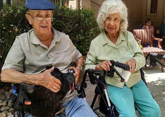 Elderly couple enjoying the company of a chicken