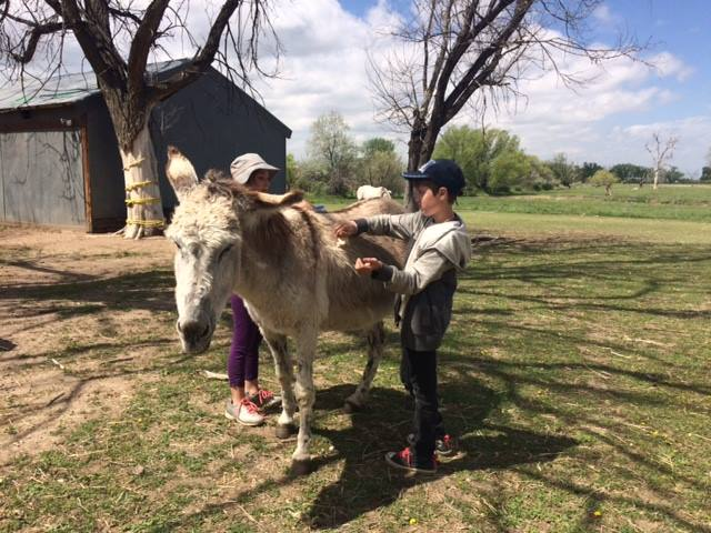 Little boy grooming Allie the donkey