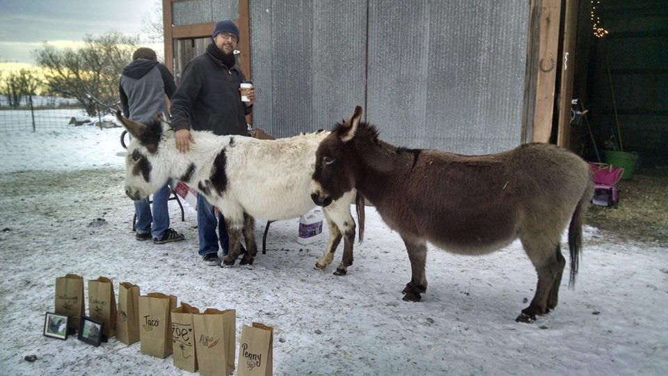 Donkeys at the barn for Animal Remembrance Ceremony