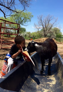 Little boy reading to Augie the goat