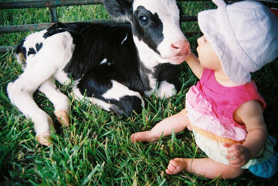 Baby girl sitting with a baby cow