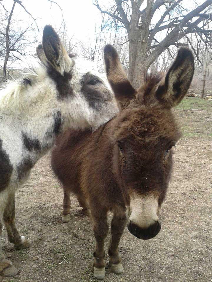 Lottie and Gertie
