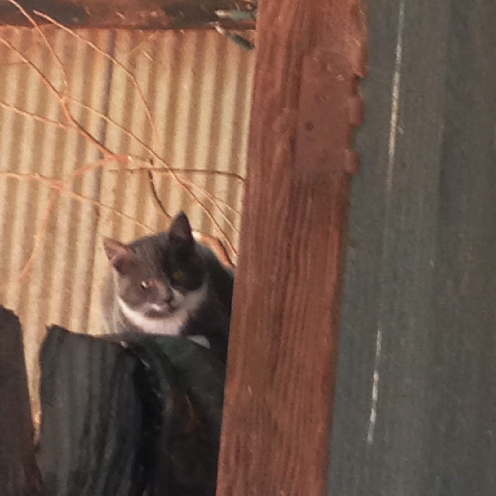 Feral kitty mama watching over things