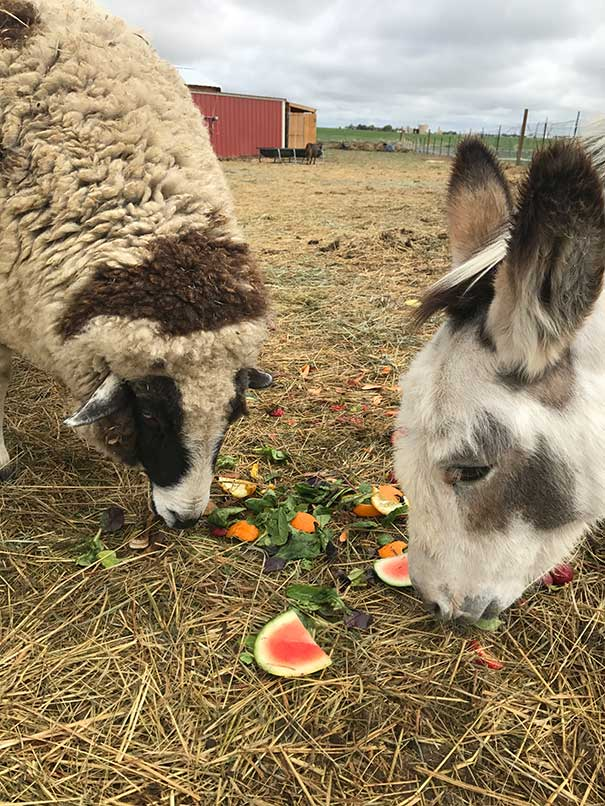 Poppy and Lottie enjoying their veggies
