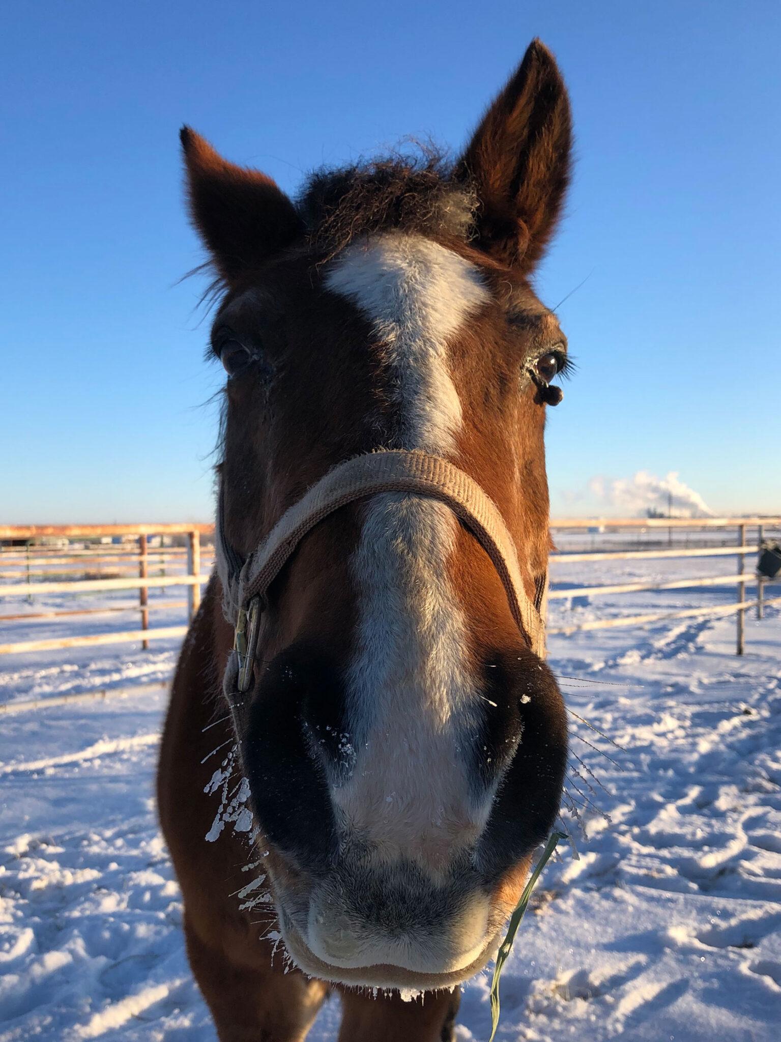 Roja the horse